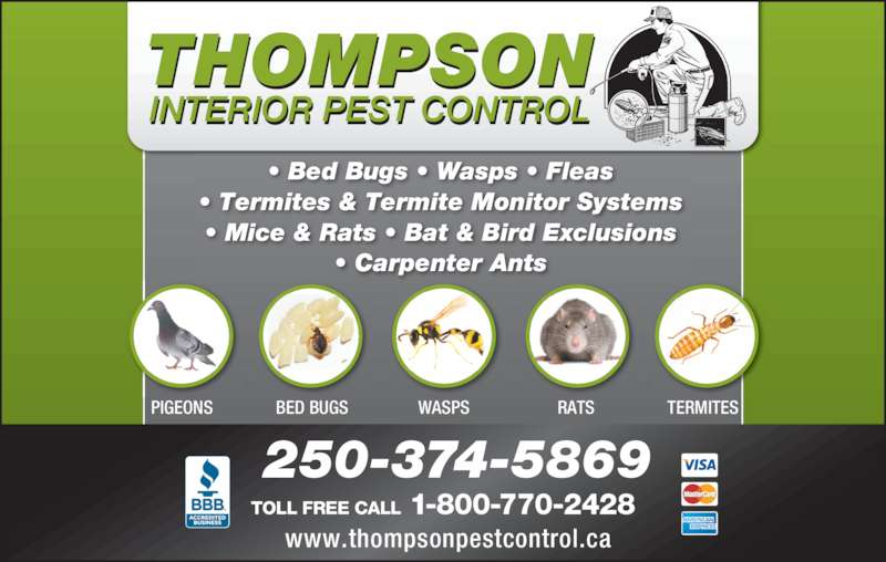 thompson interior pest control. Black Bedroom Furniture Sets. Home Design Ideas