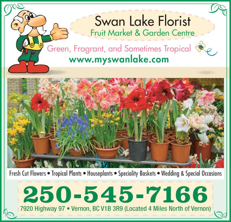 Swan Lake Florist (250-545-7166) - Display Ad - www.myswanlake.com Green, Fragrant, and Sometimes Tropical 7920 Highway 97 • Vernon, BC V1B 3R9 (Located 4 Miles North of Vernon) 250-545-7166 Fresh Cut Flowers • Tropical Plants • Houseplants • Speciality Baskets • Wedding & Special Occasions