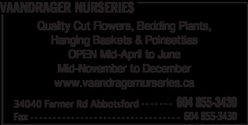 Vaandrager Nurseries (6048553430) - Display Ad - VAANDRAGER NURSERIES 34040 Farmer Rd Abbotsford 604 855-3430- - - - - - - Fax 604 855-3430- - - - - - - - - - - - - - - - - - - - - - - - - - - - - - - - - Quality Cut Flowers, Bedding Plants, Hanging Baskets & Poinsettias OPEN Mid-April to June Mid-November to December www.vaandragernurseries.ca