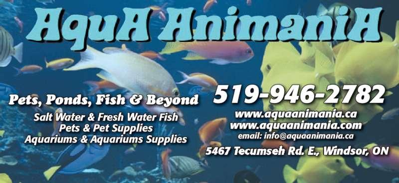 AquA AnimaniA (519-946-2782) - Display Ad - 519-946-2782 54    , ON6 ecumse ndsor www.aquaanimania.ca www.aquaanimania.com Pets & Pet Supplies Aquariums & Aquariums Supplies Salt ater Fish