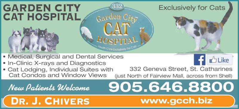 garden city cat hospital st catharines on 332 geneva