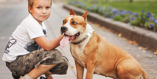 4 reasons to consider pet health insurance products