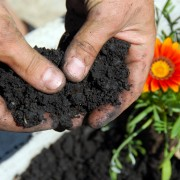 5 gardening tips for making a beautiful flower garden