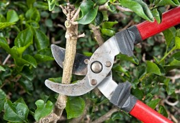 How to buy and maintain your prunning tools