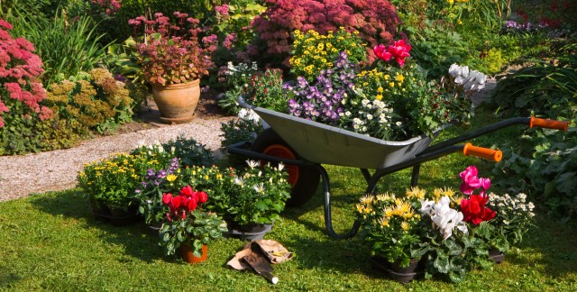 How to choose and plant colourful plants for cool summers