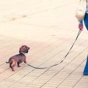 Does my dog suffer from urinary incontinence?