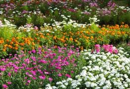 4 tips for saving money on plants