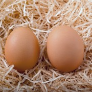 6 pro methods to raising chickens for their eggs