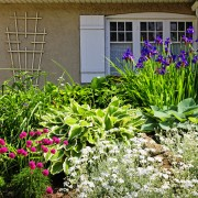 A beginner's guide to growing irises