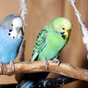 Tips for watching homes with pet birds