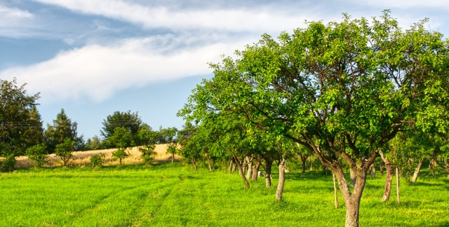 The 20 simplest trees to care for