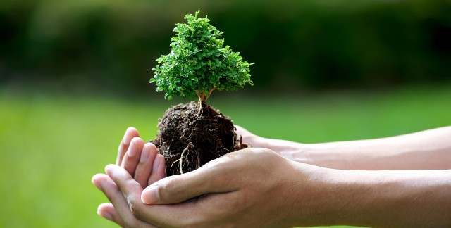 The gardener's guide to nurturing new trees