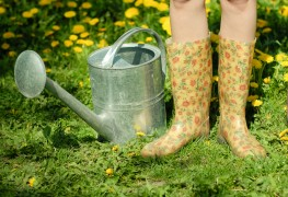 Wise watering: Use these tips to maximize absorption  and conserve