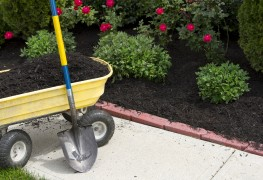 7 things you need to know about mulch