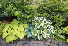 Growing plants in filtered and partial shade