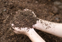 How to save money on mulch and fertilizer