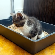 DIY solutions for litter box odours