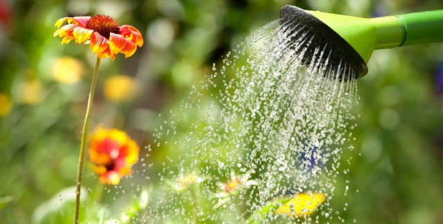 Watering your garden: 11 ways to do it better