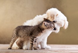 8 suggestions for natural pet grooming