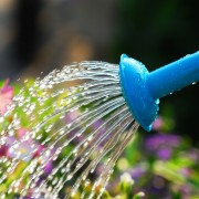 6 water conservation suggestions for your garden