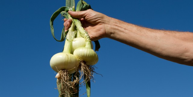 Guide to onion varieties