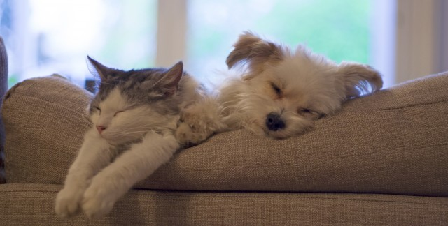 Give your pet the spa treatment & save money