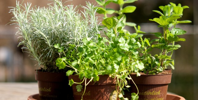 3 reasons to freeze your herbs