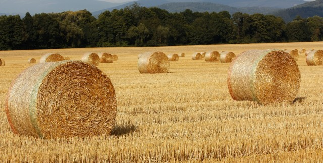 Basic methods for cutting, drying and storing hay