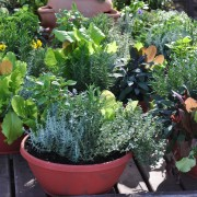 A few tips for growing plants in containers