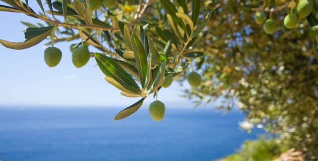 The many benefits of olive oil
