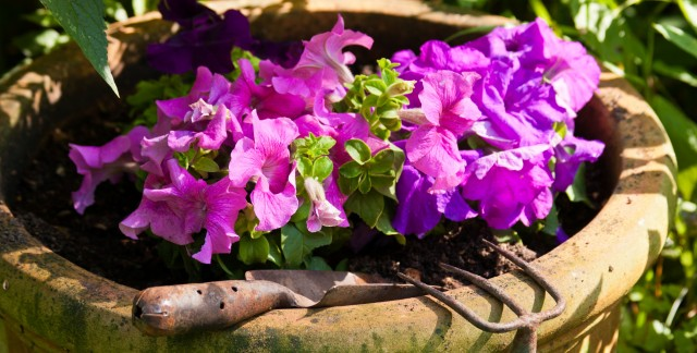 A few awesome benefits of container gardens