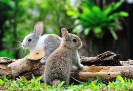 Tips to keep your garden free of birds, moles, rabbits and gophers