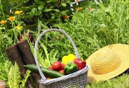 Basic tips for growing a delicious vegetable garden