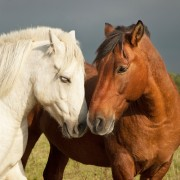 How to Care for Horses and Pets