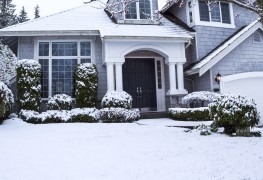A smart guide to protecting tender shrubs in the winter