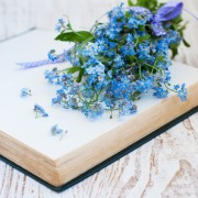 Care-free annuals: Add a pop of blue with the forget-me-not