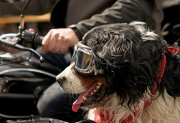 Take your dog on your next motorcycle ride
