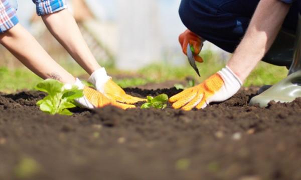 5 Health Benefits Of Gardening Smart Tips