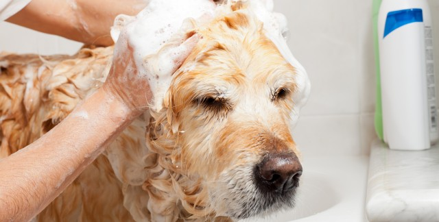 Home-grooming tools to pamper your pup