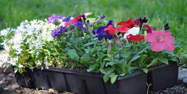 Unusual tips to promote plant growth