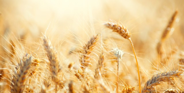 Get to know your grains and grasses