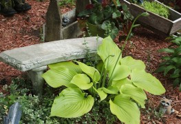Maintaining plants in a dry and shady garden