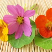 The ABCs of edible flowers