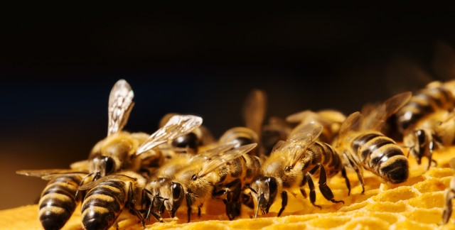 Season-by-season pointers to care for your beehive