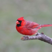 Bird and nature watching tips to help you see more