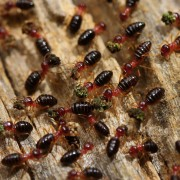 4 pests that may eat into your house