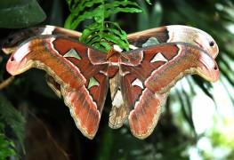 4 ways to ward off moths and protect your clothes
