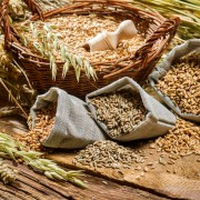 Discover how to properly store grains and nuts
