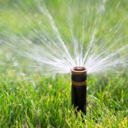 12 pointers for using grey water in your garden