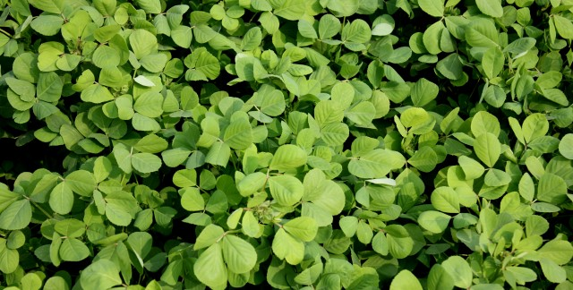 Fenugreek: A standout ingredient